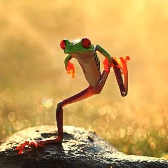 Grenouille dansant